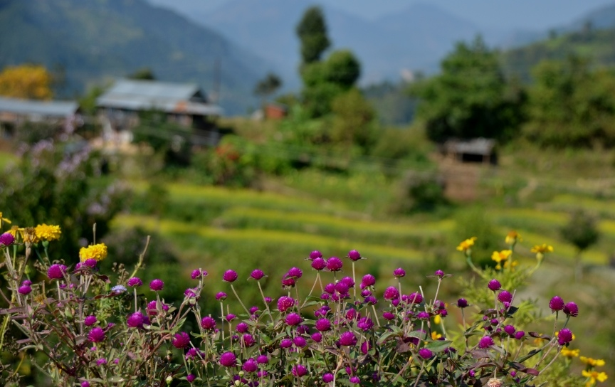 Flowers-and-villagge-CiaoNamastè-Nepal