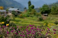 Flowers-and-villagge-CiaoNamastè-Nepal